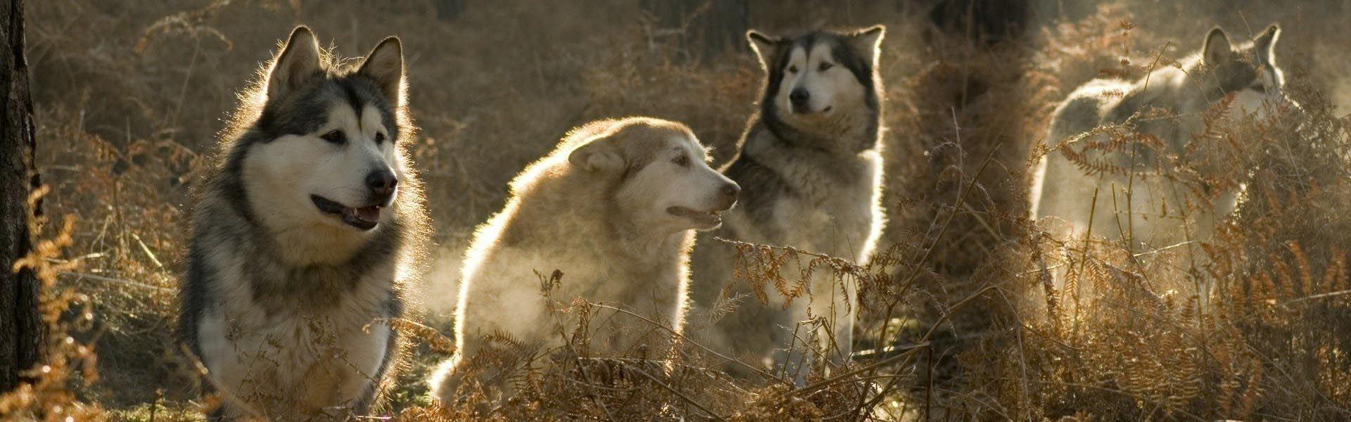 В каждом из нас спит волк. Часть 2